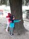 drzewa (1).jpeg