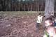 Galeria Żabki sadzą drzewa